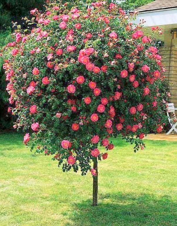 Arbustos viveros santa ana - Arbustos para jardin ...
